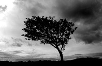 Lone tree near Plockton, Wester Ross
